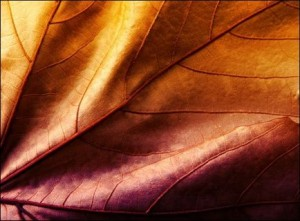 Close Up of Colorful Leaf