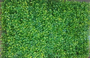 Small Green and Yellow Leaves Tiles for Vertical Garden 60 cm x 40 cm (2.60 Sq.ft) (Pack of 4)