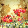 Original Watercolor Poppy Flower