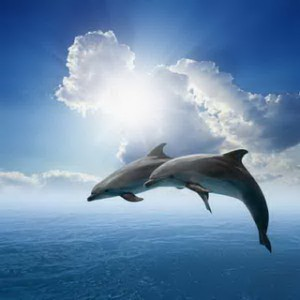Couple Jumping Dolphins