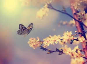 Butterfly and Cherry Tree Flower