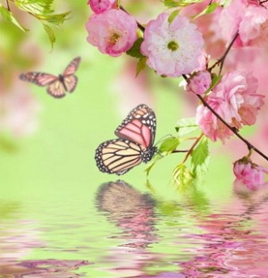 Pink flower and Butterfly