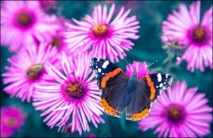 Butterfly and Violet Flower