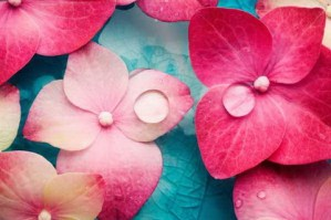Water With Pink Petals