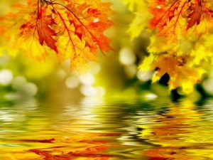 Leaves Reflecting in the Water