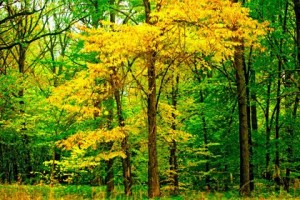 Tree With Yellowing Leaves