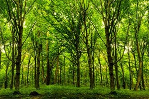 Forest Trees Green Wood
