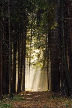 Autumn Forest Way to Heaven