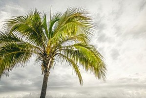 Image Of The Palm Tree