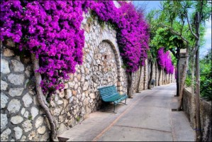 Vibrant Flower Draped Pathway