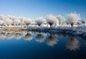 Nature Winter Lake and Trees