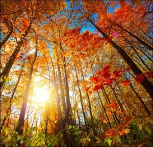 Autumn Forest Sunlight