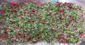Dry Leaves with Red Flowers Tiles for Vertical Garden 60 cm x 40 cm (2.60 Sq.ft) (Pack of 3)